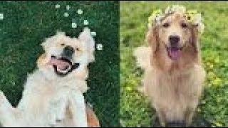 Симпатичные домашние животные Сборник видео милые животные из самых симпатичных животных # 9