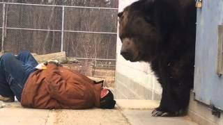 Jimbo the bear - wants to go back to bed.
