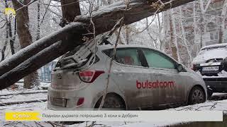 Паднали дървета потрошиха 3 коли в Добрич