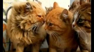 Сердобск ТВ   Сила трёхцветных кошек 12 07 12