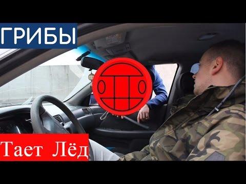 Грибы - Тает Лёд L Problematics