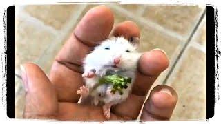 МАЛЕНЬКИЕ ЖИВОТНЫЕ, смешные животные | BABY ANIMALS, funny animals #649