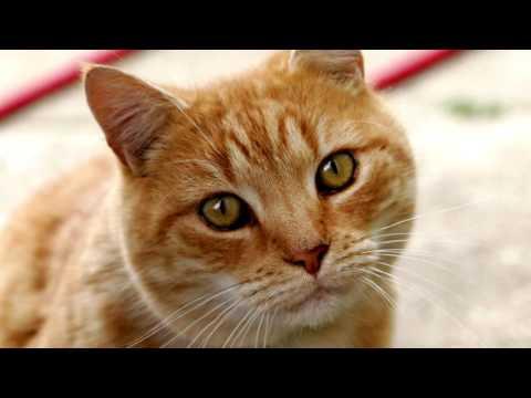 Рыжий кот песня номер 2.