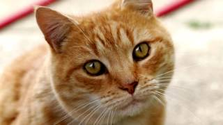 відео про рудих котів/видео про рыжих котов/funny videos about cats