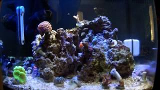 Reef Tank Update