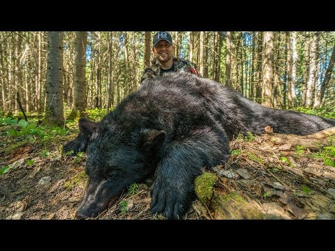 Bowhunting Black Bears In Quebec!
