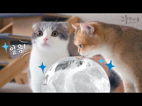 I made a giant ice ball and played with the cat