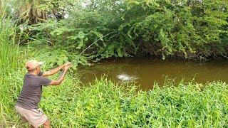 Fish hunting|| Fishing For Tilapia Fish