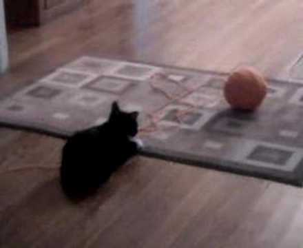 my cat playing with a ball of yarn    boring    dont watch