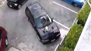 кошка на машине