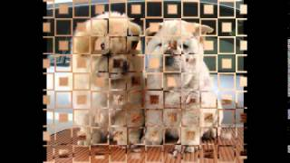 корм для собак на дом(, 2014-10-20T18:46:15.000Z)