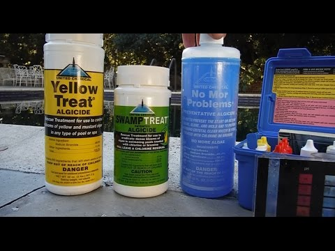 What Causes Algae in a pool & How to Treat and Prevent It