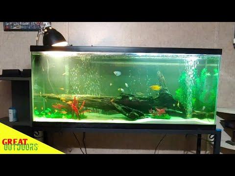 The 55 gallon community fish tank