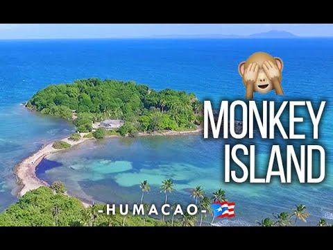 """Cayo Santiago """"Isla de los Monos"""", Humacao"""