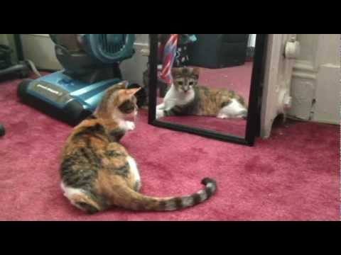 Minnie meets her reflection for the first time