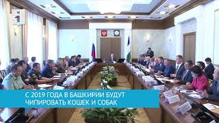 С 2019 года в Башкирии будут чипировать кошек и собак