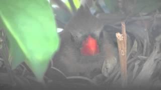 Cardinal V4(, 2015-04-22T04:00:30.000Z)