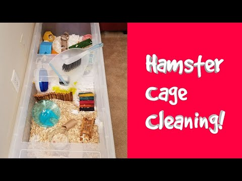 Dwarf Hamster Cage Cleaning!