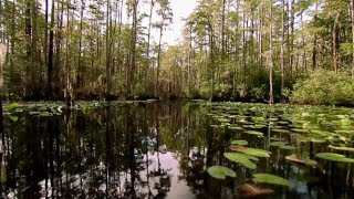 Okefenokee Swamp | Georgia Outdoors