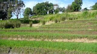 Sri Lanka,ශ්රී ලංකා,Ceylon,Beautiful Rice Paddy Terraces (06)