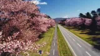 森山直太朗 - さくら(独唱) / Moriyama Naotarou - Sakura [ cover ]