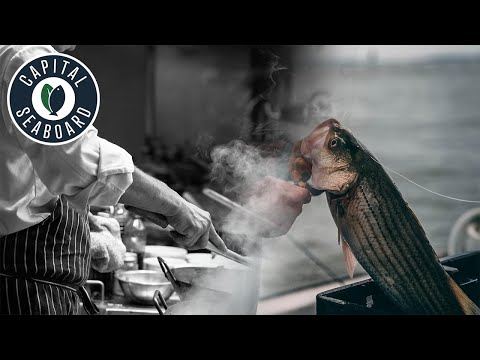 Chesapeake Bay Commercial Striped Bass Fishery (aka Rockfish)