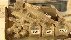 Découverte d'os humains de la lignée Néandertal à Tourville-la-Rivière