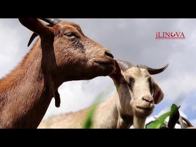 iLINOVA Kenya