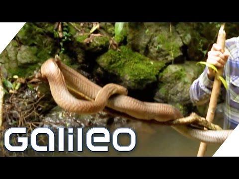 china-extrem---survival-tour-im-urwald- -galileo- -prosieben