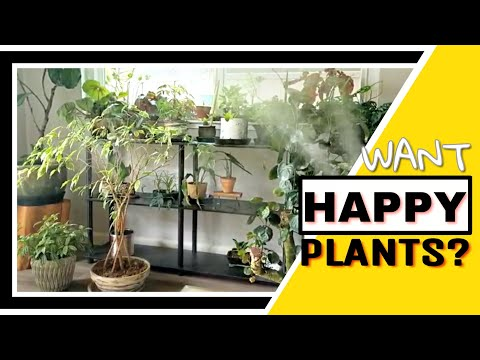 If you want HAPPY HOUSEPLANTS you NEED THIS!
