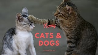 Funny Cats And Dogs Compilation Try Not To Laugh