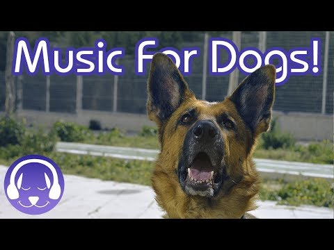 Deep Relaxation Music for Dogs - Calm My Dog Instantly with NEW Reggae Music! (2018)