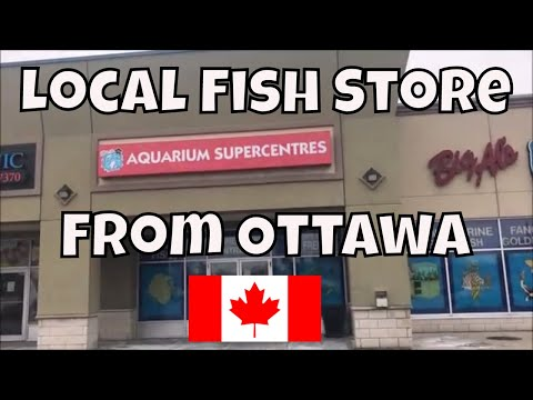 LFS Tour From Ottawa Canada Big Al's SUPERSTORE!