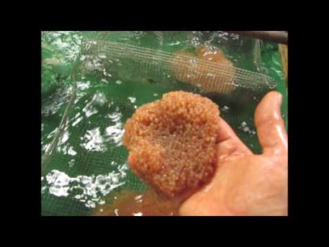 How to Catch Catfish During the Spawn - Poor Catfishing Conditions from YouTube · Duration:  6 minutes 59 seconds  · 784 views · uploaded on 5/23/2017 · uploaded by Dieter Melhorn Fishing