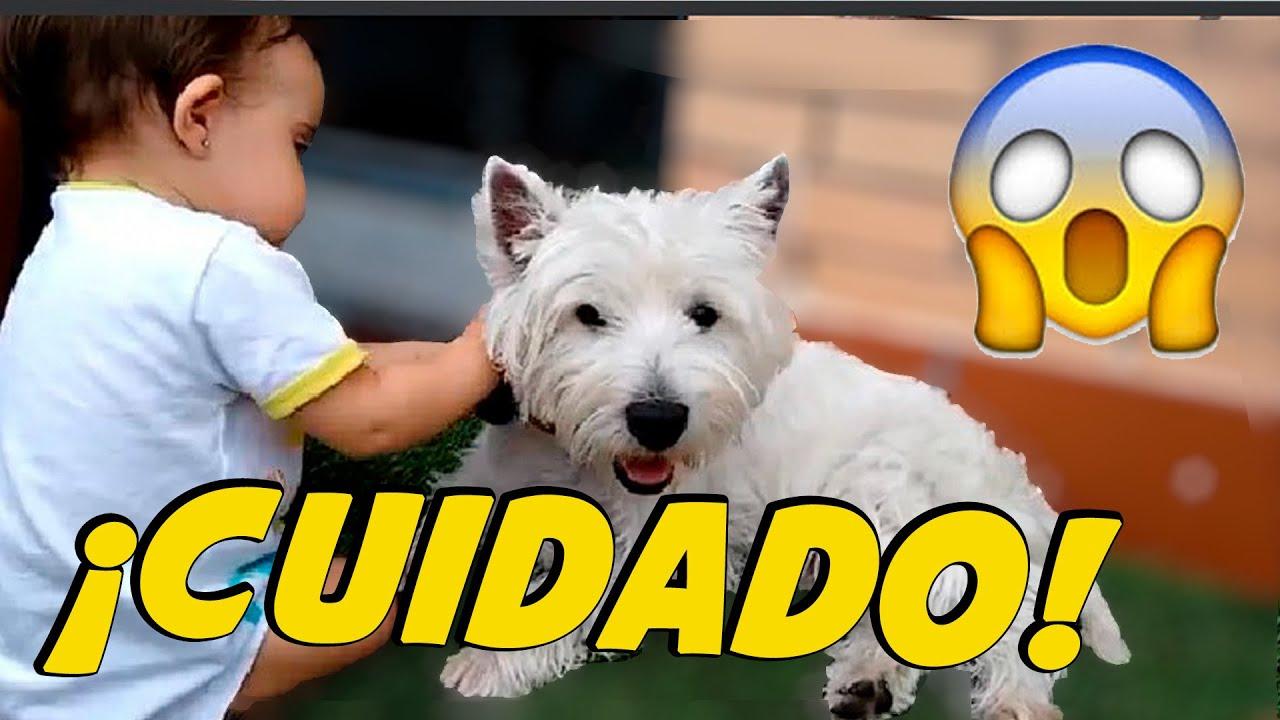 Perros y niños  👶🏻🐶 | No hagas esto ❌