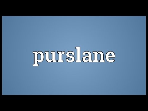 Purslane Meaning