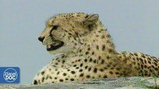 Serengeti National Park - Part 2