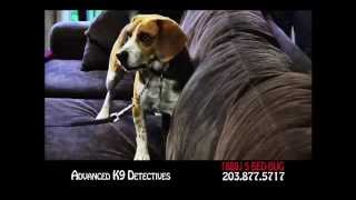 K9 Detectives