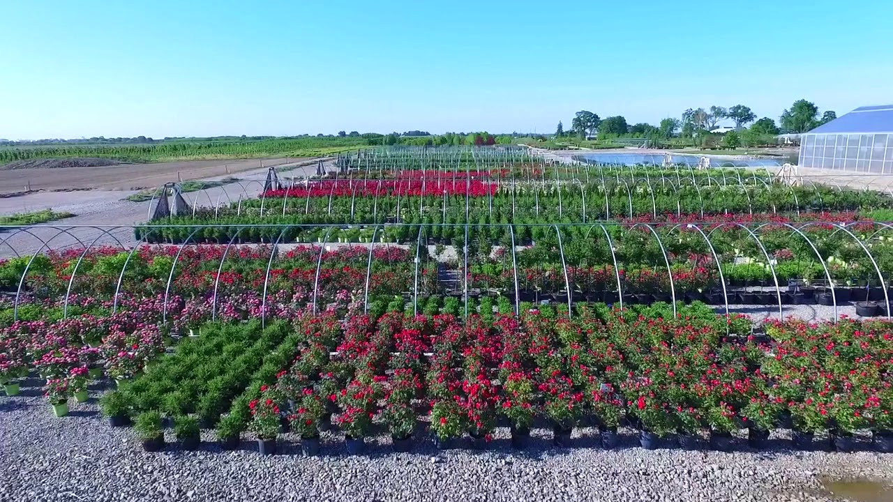 Green Glen Nursery Illinois Whole
