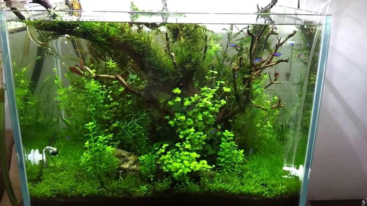 Led Aquarium Lighting Plants