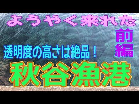 釣り動画ロマンを求めて 220釣目(前編:秋谷漁港)