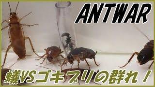 蟻戦争#164 トゲオオハリアリVSゴキブリの群れ~かえりみない覚悟~編【English subtitles】~ant vs hordes of cockroaches~