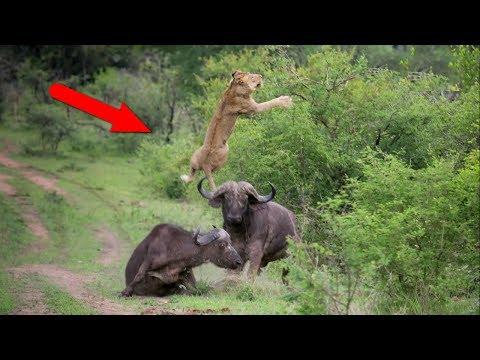 видео: Когда не зассал и заступился! Версия животных