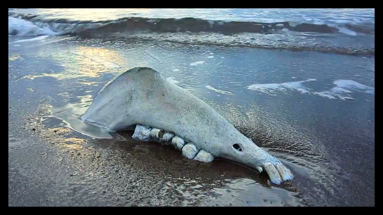 Strange Sea Creatures Washed Up