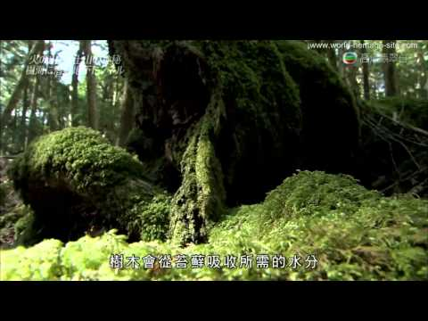 [Cantonese] Japan Fujisan, sacred place and source of artistic inspiration Part 1 of 2