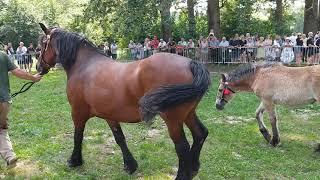 Hodowla koni – piękna podlaska tradycja