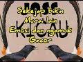 Masteran Murai Batu Sekejap Bikin Murai Lain Emosi Dan Ngamuk  Mp3 - Mp4 Download