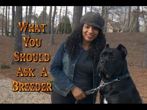 Top 3 questions to ask a Cane Corso Breeder