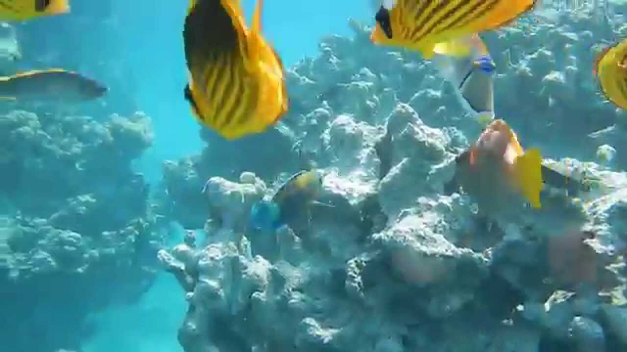 Bettdekoration Picture Of Jaz Fanara Resort Residence Sharm