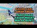 Kacer Cari Lawan Emosi Pancingan Kacer Macet Malas Bunyi Agar Cepat Ngeplong Gacor  Mp3 - Mp4 Download